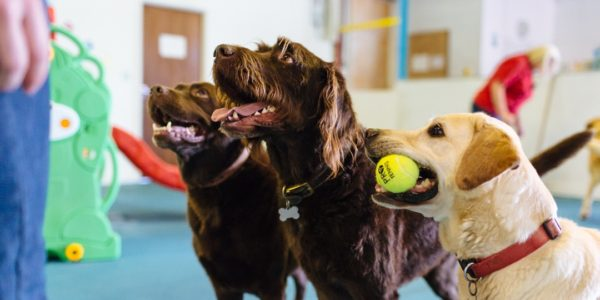 New Canine Creche Ipswich