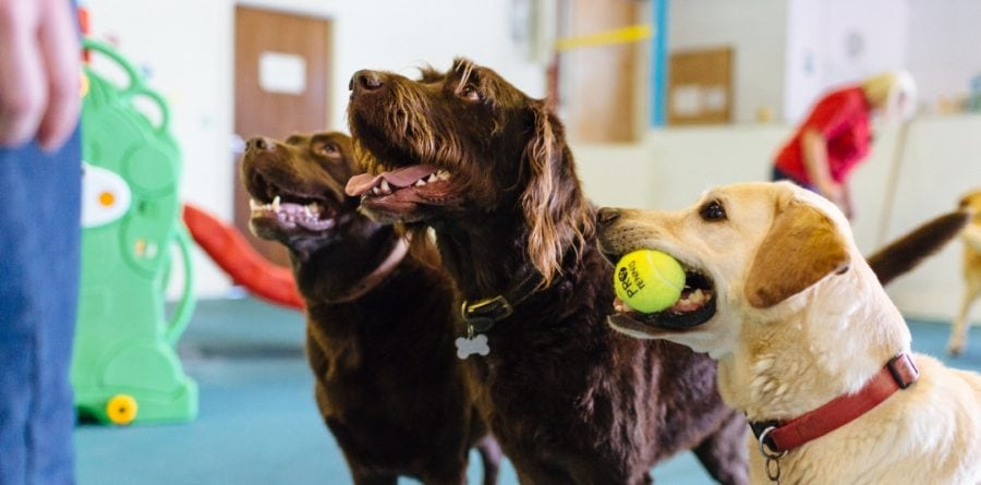 New Canine Creche Opening in Ipswich