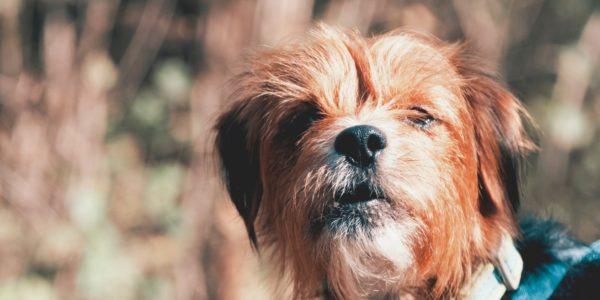 Canine Creche welcomes new Dog Walking Code