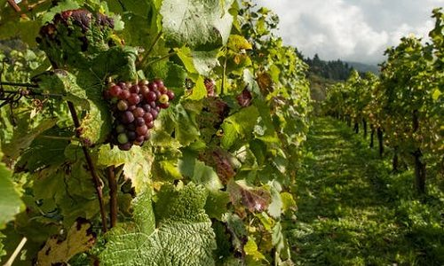 Authentic wine tour