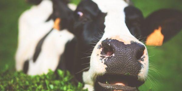 farming income overview