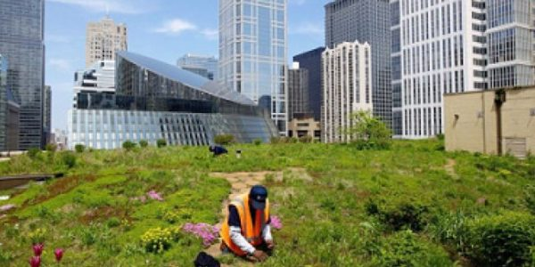 blue and green roofs