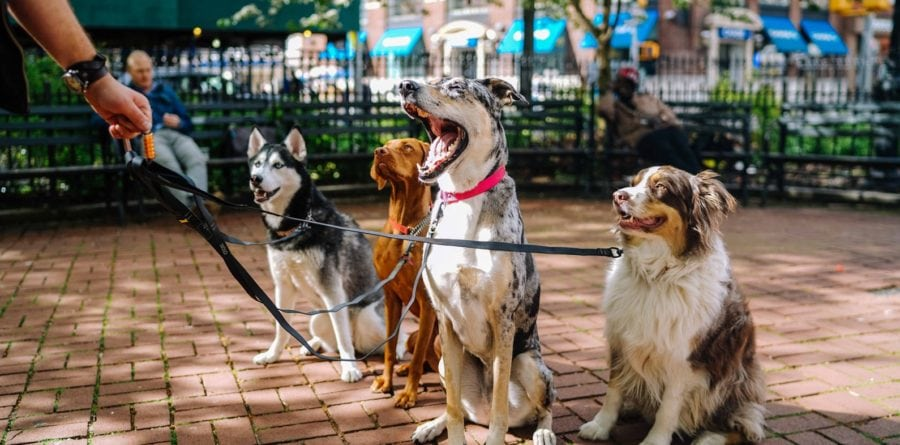 Laws changing for animal businesses