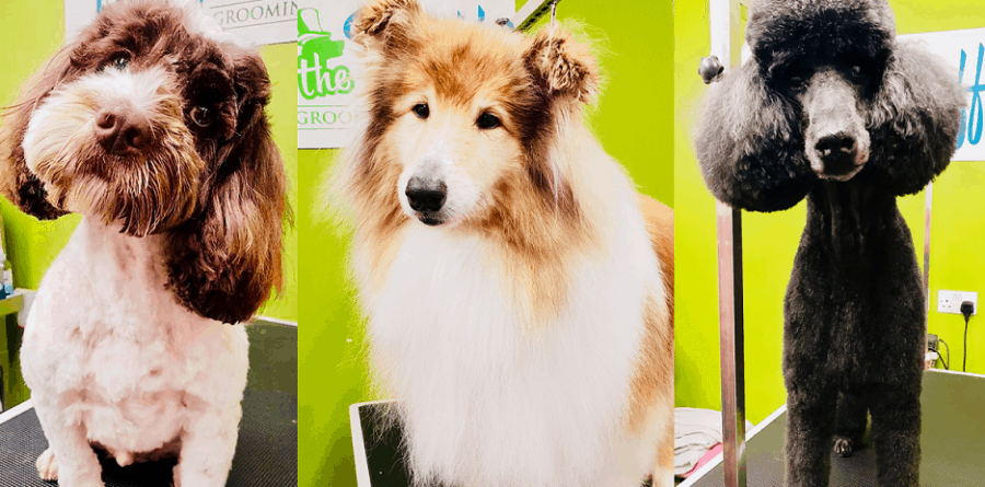 Fluff The Ruff Spa share top dog grooming tips