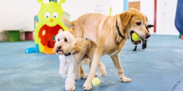 puppy social club
